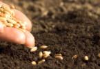 Семя – в землю!
