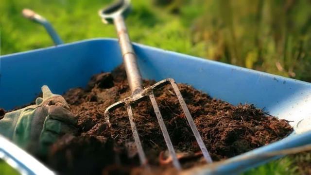 От чего зависит зимостойкость растений