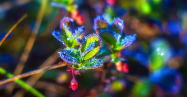Как сохранить растения зимой