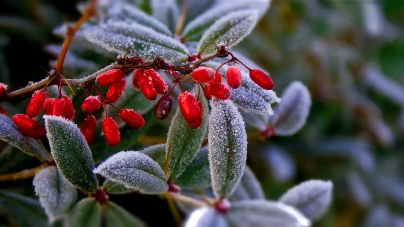 Подготовка садовых растений к зиме