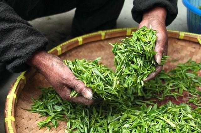 чай, фермерский дом, рука