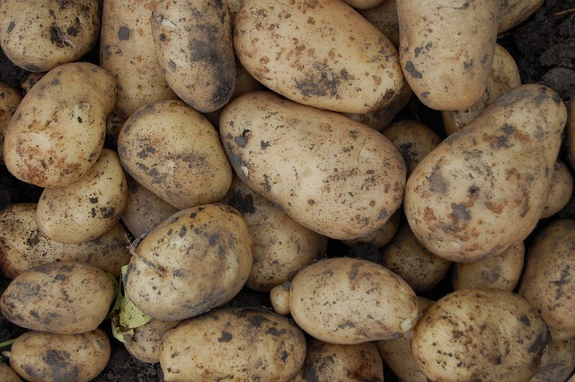 картофель, овощ, клубни