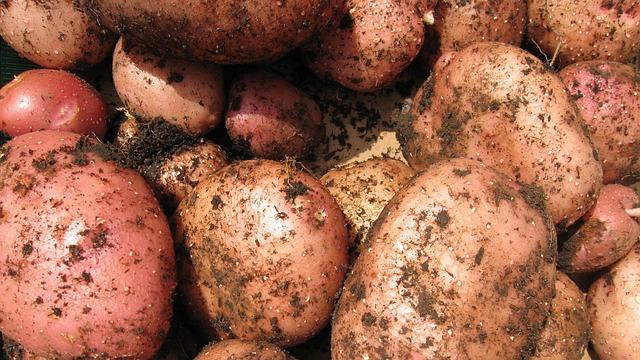 картофель, растительный, картошка