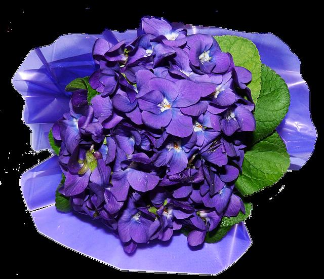 цветы, фиалки, духи