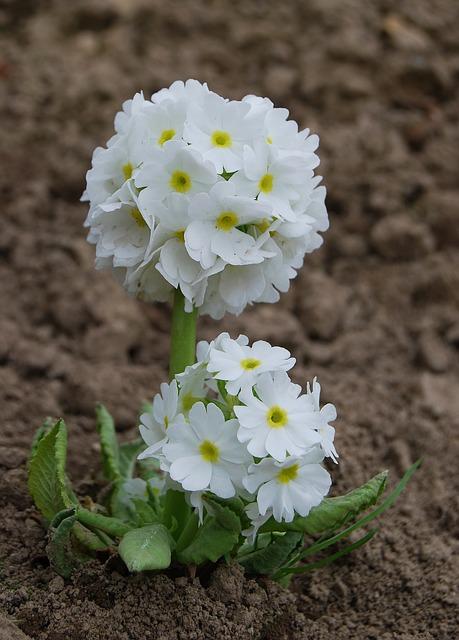 цветок, природа, завод