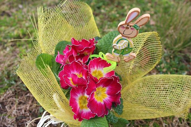 примула, prymulka, весенние цветы