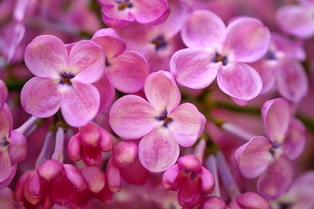 цветок, природы, завод