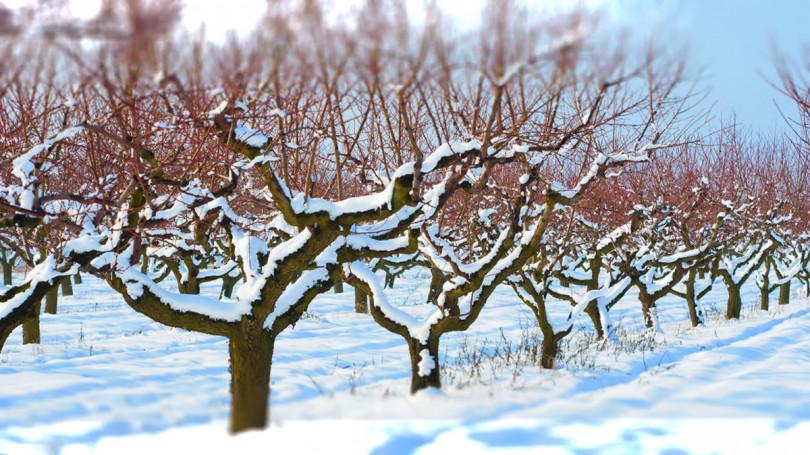 Стоит ли уплотнять снег в саду