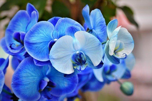 орхидеи, орхидея цветок, цвести