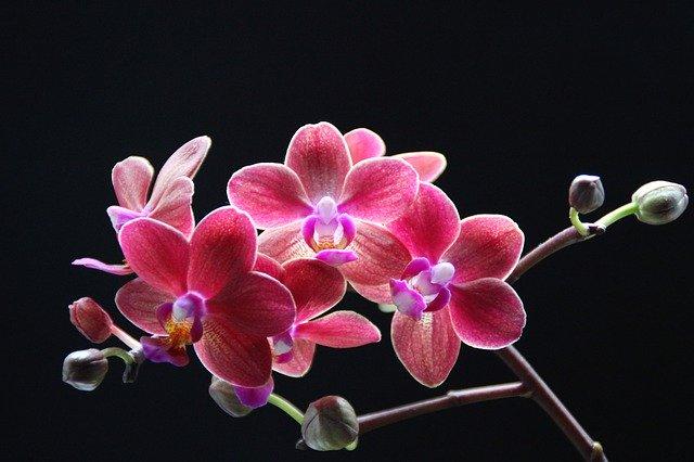 орхидеи, завод, орхидея